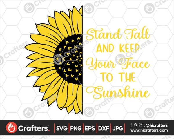 534 Realistic Sunflower SVG PNG